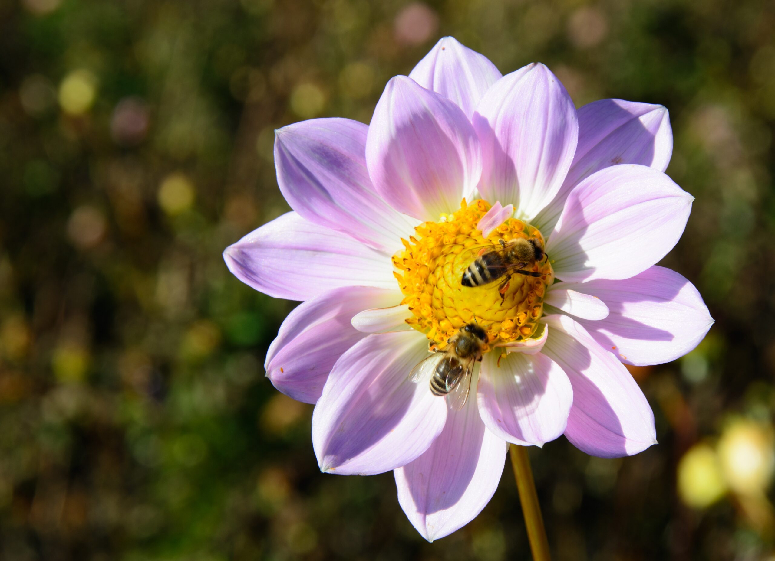 Read more about the article Bees and Their Importance